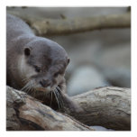Adorable Otter Poster
