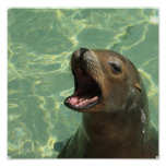 Chatty Sea Lion Poster
