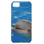 Lovable Dolphin iPhone 5C Case