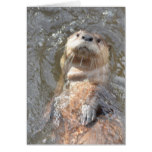Otter Back Float Card