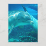 Playful Dolphins Postcards