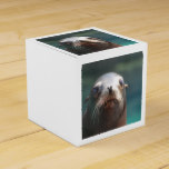 Sea Lion with Whiskers Favor Box