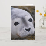 Sweet Baby Seal Greeting Cards