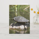 Turtle on a Rock Greeting Card