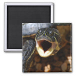 Turtle with Mouth Open Magnet