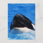 Whale Sounds Postcard