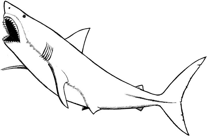 sharks coloring pages - photo#33