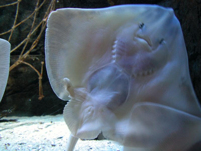 Marine Animals and Marine Life Photo Gallery